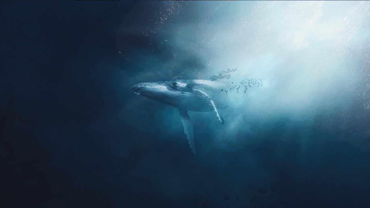 Sperm whale Gabriel Dizzi Drexciya Moby-Dick